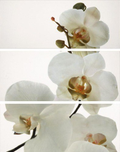 Декор DECOR SET ORQUIDEA/ BLANCO BRILLO (3)